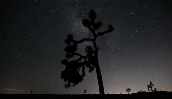Night Sky - Photo by Sanja Tabor